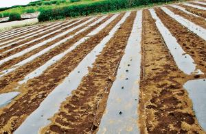 環境に優しい生産資材の供給(JAいるま野 第三営農販売センター)
